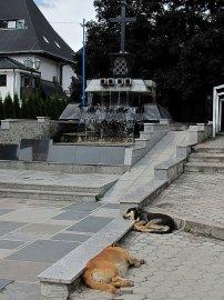 """010: 10 A o dva kroky vedle leží všudypřítomní """"mrtví"""" psi."""