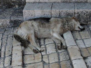020: 20 Dlažba z vyleštěného vápence klouže i za sucha, za deště je to na ní horší než na bruslích. Psů je v Mostaru taky dost, jako v Jajcích.
