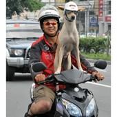 skútr a pes